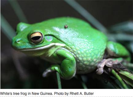 FrogsWildlife12