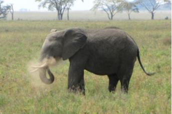 ElephantInfo